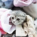 ふわふわ洗濯物大すき!かわいいにゃんこ大集合